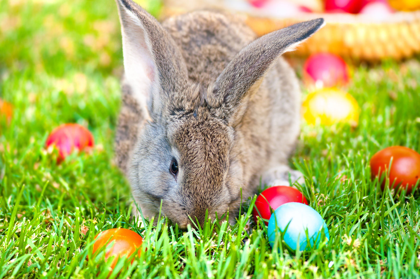 Search for the Easter bunny and enjoy other spring events and activities when staying at Medicine Hat hotels such as the Comfort Inn and Suites.